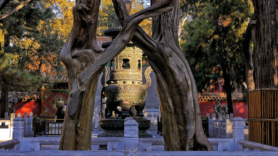 Ancient Trees in Forbidden City, Beijing, China